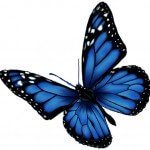 buttefly_image_cutout